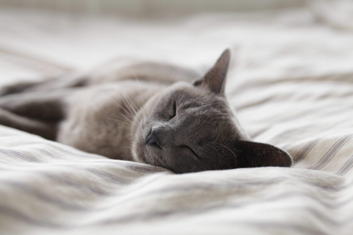 Safe dreams: sleep workshops starting this week